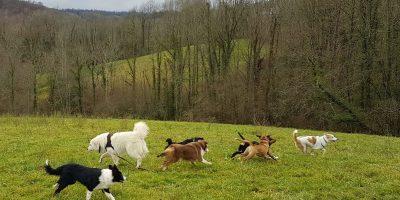 Comportementaliste Educateur canin_cours éducation chiens lâchés